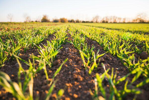 formación consumo responsable y producción sostenible
